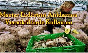 Mantar Endüstrisi Atıklarının Vermikültürde Kullanımı