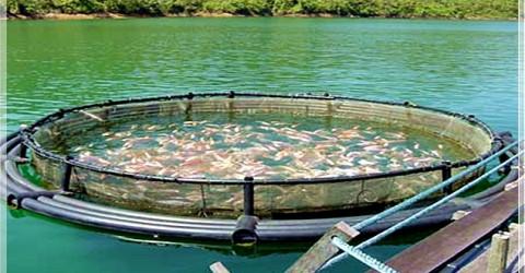 Solucan Gübresi ve Balık Yetiştiriciliği