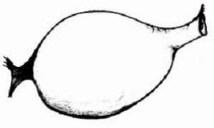 Solucanlar : Çiftleşme ve Üreme I