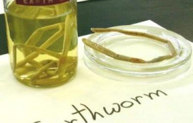 Solucanların Biyolojisi