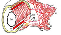Solucanlar ve Dolaşım Sistemleri