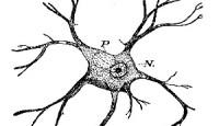 Solucanlar ve Sinir Sistemleri