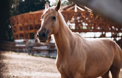 At Yetişticilerine Özel Protein Tozu