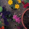Solucan Gübresinin Bitki Besleme Amaçlı Kullanımı