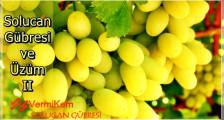 Üzüm ve Solucan Gübresi II