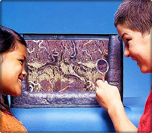okulda vermikültür
