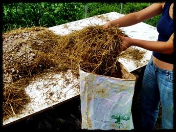 istiridye mantarı kompostu